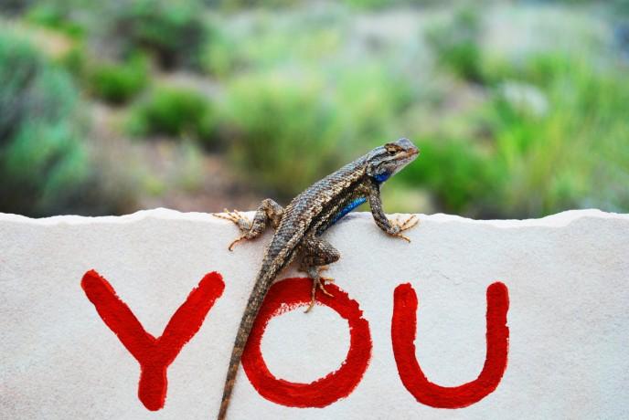 blog barocc gecko